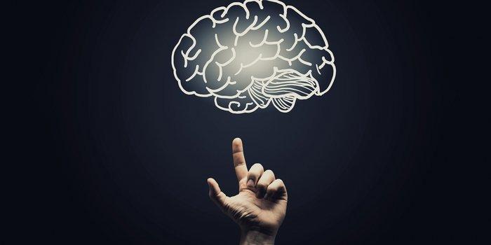 20160105180846-brain-psychological-psychology-thinking-network-smart-education-creative-pointing--1--1