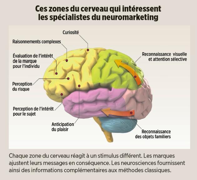 cerveau-1
